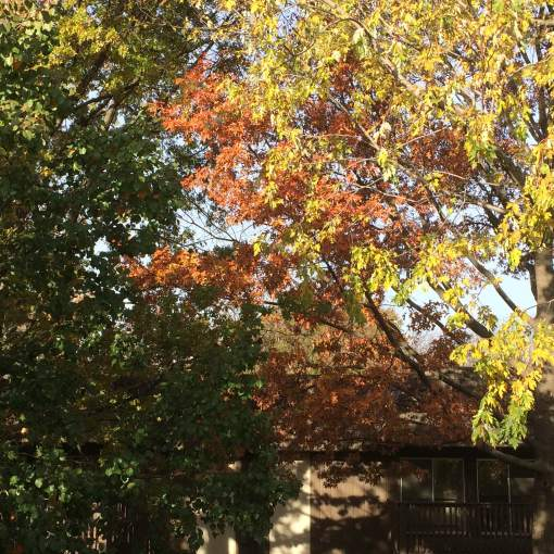 leaf-removal-Kansas-City-Overland-Park-remove-leaves