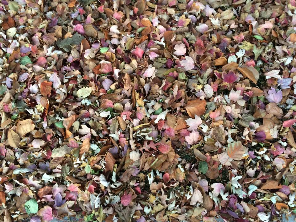 leaf-removal-service-leaves-Kansas-City-fall-clean-up