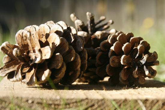 om skog och ungdom