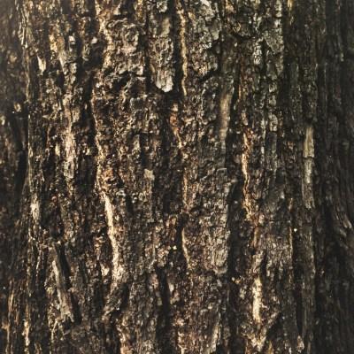 The bark on a tree
