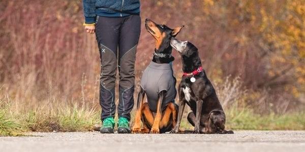 tečaj za pse