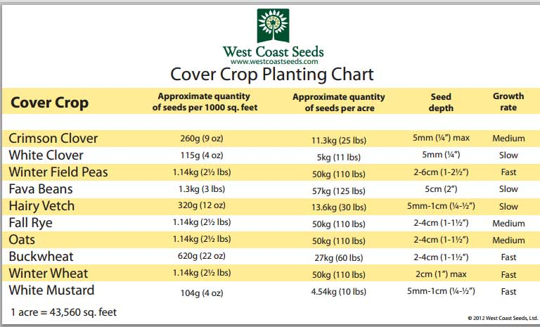 Consider Cover Crops Skookum Food Provisioners Cooperative
