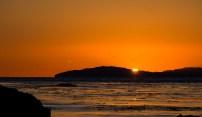 Sun setting and seagulls flying