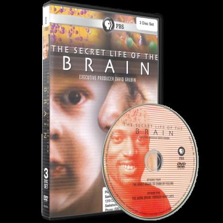 The Secret Life of the Brain