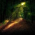 Dialog mellan mörker och ljus