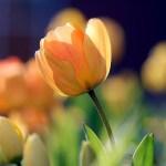 Tanka om påsken