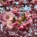 100 ord om våren 2019