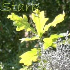 1609-stark2