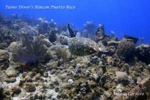 By-ac-tortugas-31