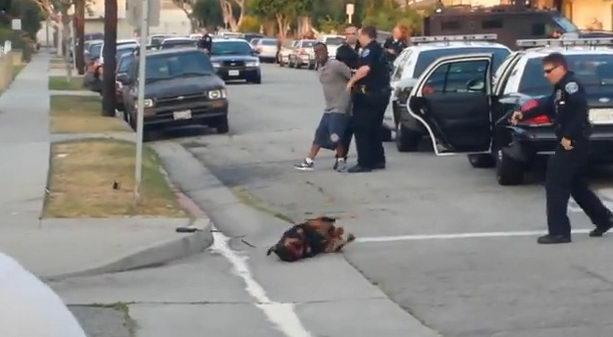 Полицейский расстрелял собаку