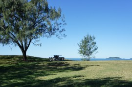 trees in Emu park