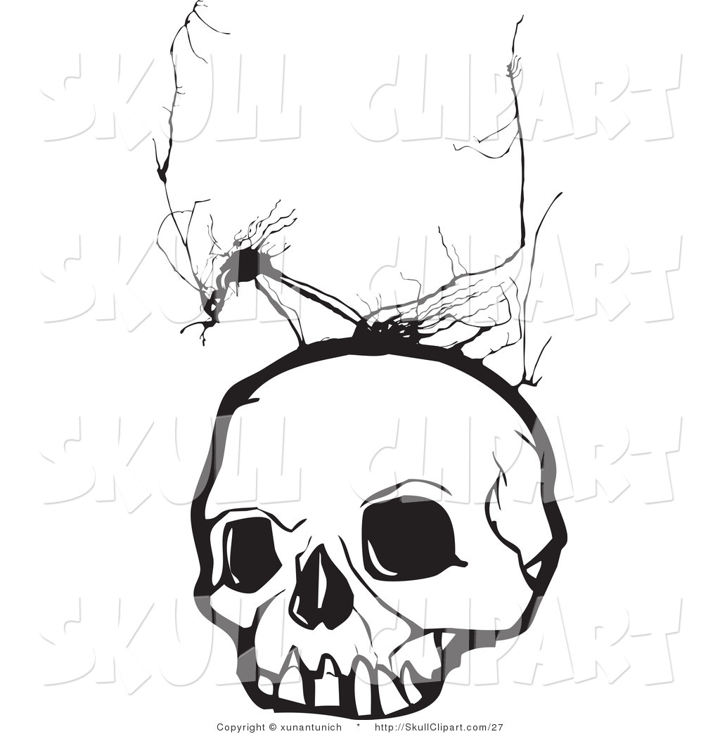 Vector Clip Art Of A White Human Skull With Crack Marks By