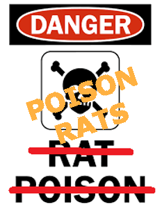 poison-rats