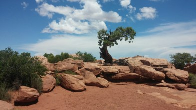 A stunted tree in southern Utah on a boiling hot day.