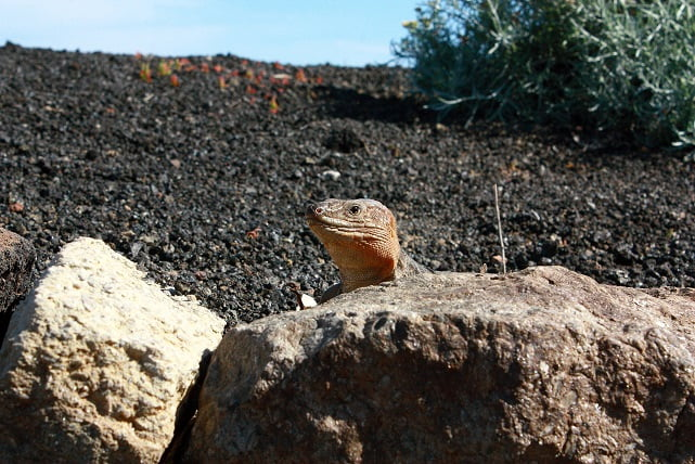 lizard_shore_tours_gran_canaria_guided_private_excursions_sky_rebels