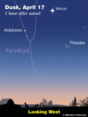 By April 17th, the Pleiades sink 11° away from Venus.