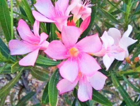 bloom 2