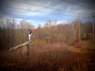 mariah power lines