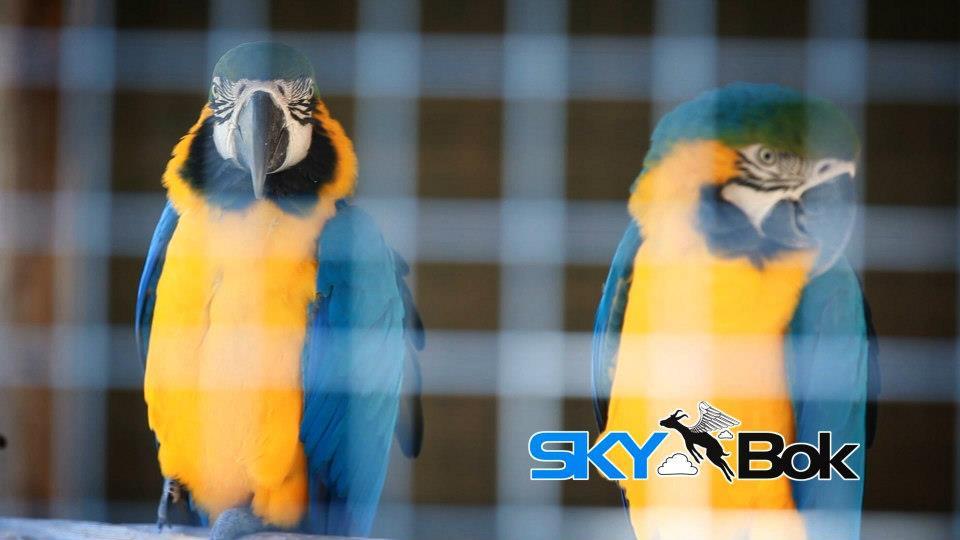 African Dawn Wildlife Sanctuary South Africa Skybok