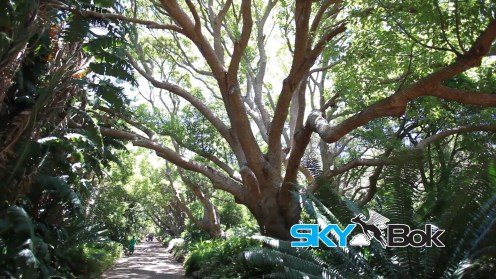 Kirstenbosch Gardens Cape Town Skybok Video Profiling South Africa