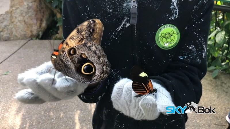 Skybok Films The Butterfly Pavilion, Denver, Colorado