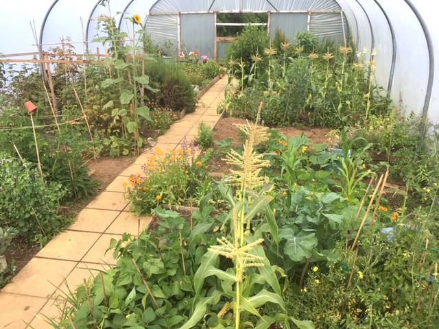 Inside view of a polytunnel