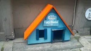 Cat Hostel