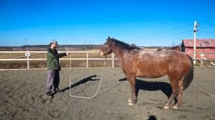 Selfie Training Horse #1