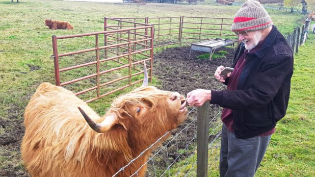 Dad Feeding Hairy Coo