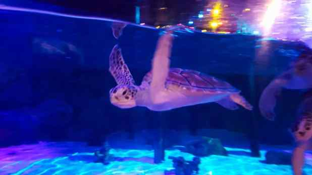 Turtle at Ocean World
