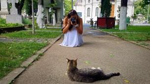 Cats in Bellu Cemetery