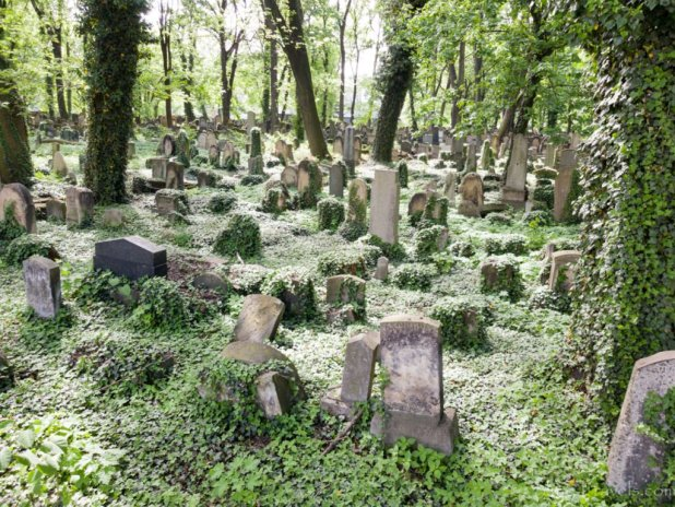 New Jewish Cemetery Krakow