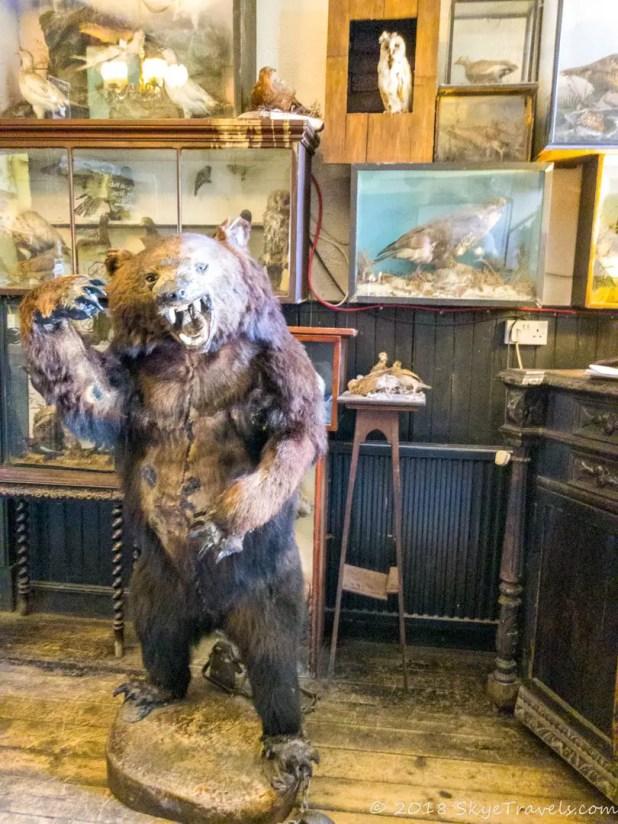 Drover's Inn Bear