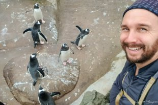 Selfie with Penguins at the Edinburgh Zoo