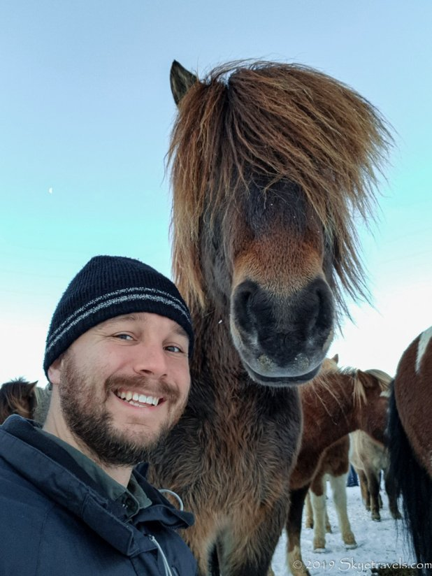 Selfie with the Hound's Icelandic Horse