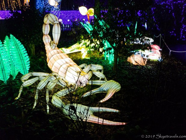 Lobster Lantern