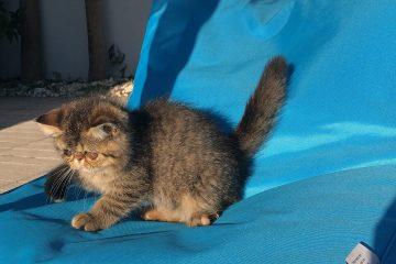 Skyfall Wonder Cat