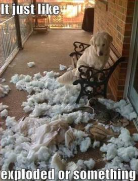 dog next to an exploded cushion