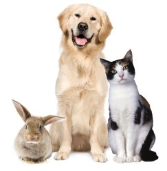 Dog-Cat-Rabbit-bridgend1