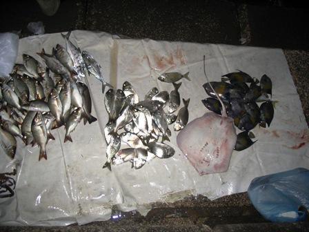 Fish market at Corniche