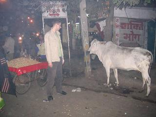 Swieta krowa w New Delhi