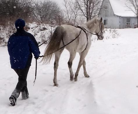 Nice and relaxed as he heads back to the barn