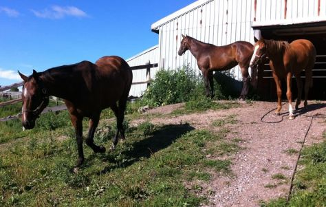 Weezy has things to do and places to go. That's her sister Esmerelda up at the top, and her little yearling buddy, Diva (the chestnut).