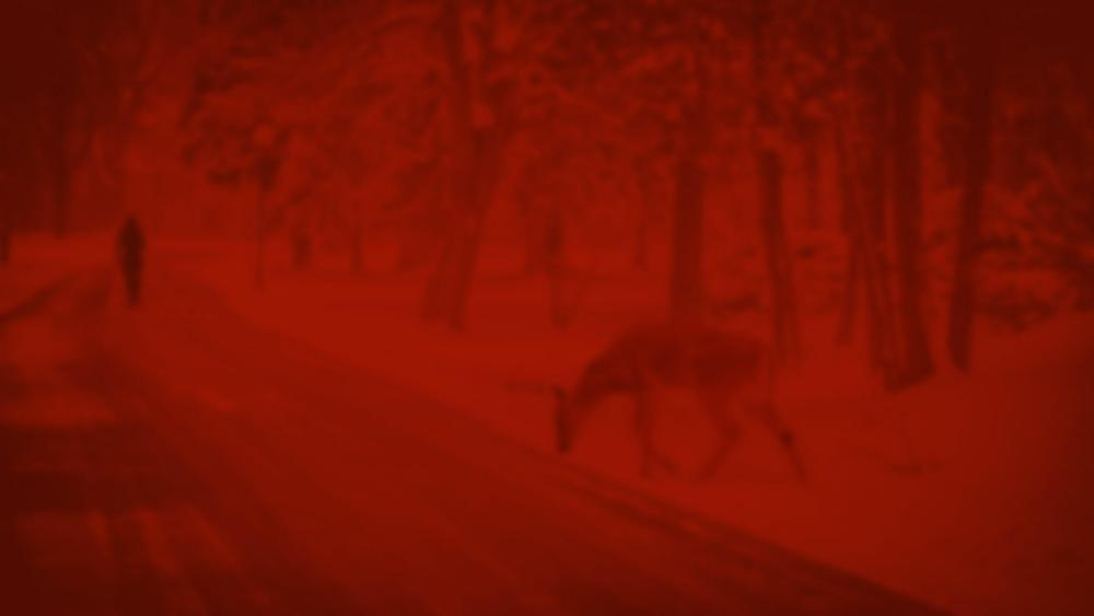 red_deer.jpg