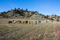 SABourne_montana_horses