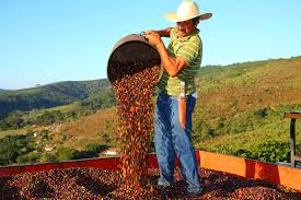 Decline in coffee prices is a major concern for farmers
