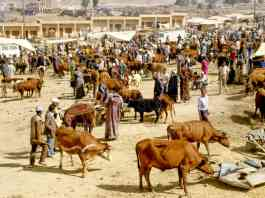 Nomadic farmers in Morroco assert their rights to free movement