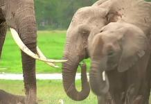 We must be allowed to sell ivory, elephants: Southern African nations