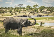 sky news africa Loners no more: Male elephants stick together, study finds