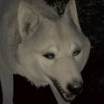 Profile picture of Wolvebane